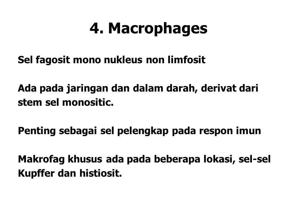 4. Macrophages Sel fagosit mono nukleus non limfosit