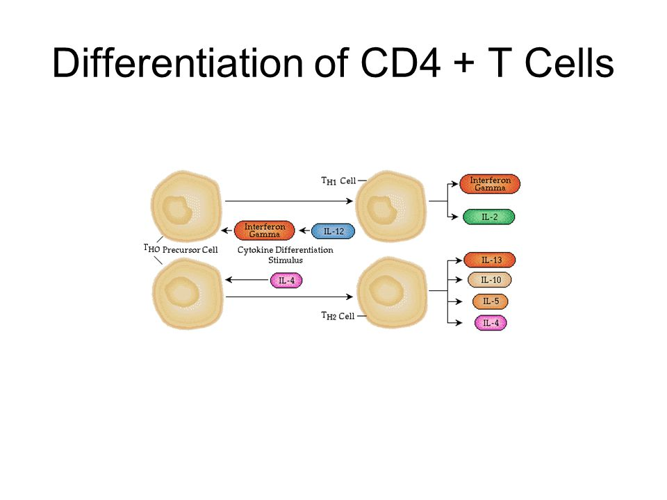 Differentiation of CD4 + T Cells
