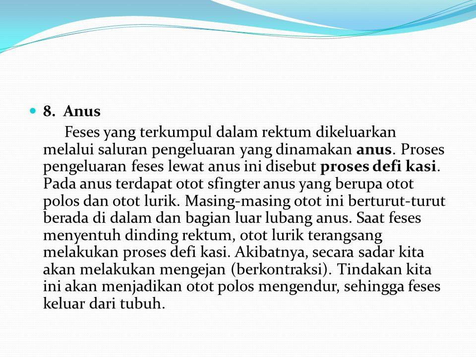 8. Anus