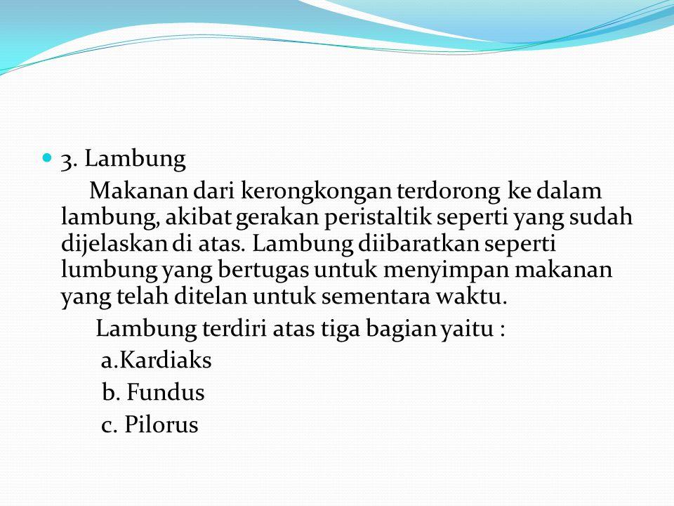 3. Lambung