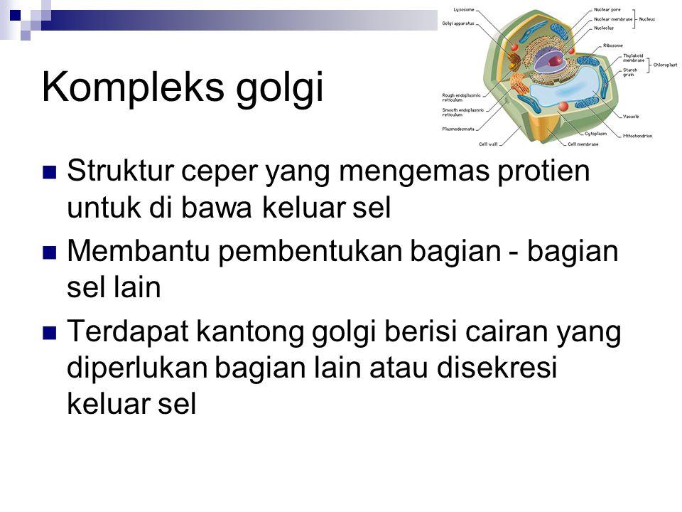 Kompleks golgi Struktur ceper yang mengemas protien untuk di bawa keluar sel. Membantu pembentukan bagian - bagian sel lain.