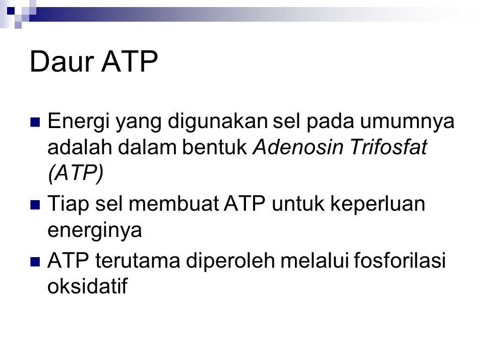 Daur ATP Energi yang digunakan sel pada umumnya adalah dalam bentuk Adenosin Trifosfat (ATP) Tiap sel membuat ATP untuk keperluan energinya.