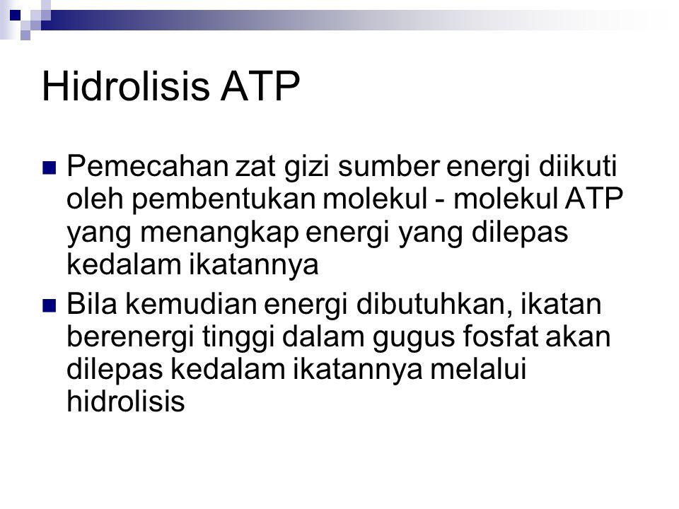 Hidrolisis ATP Pemecahan zat gizi sumber energi diikuti oleh pembentukan molekul - molekul ATP yang menangkap energi yang dilepas kedalam ikatannya.