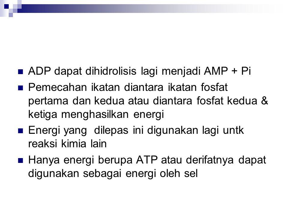 ADP dapat dihidrolisis lagi menjadi AMP + Pi
