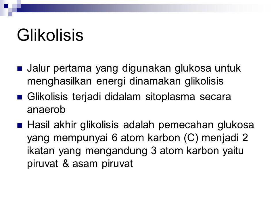 Glikolisis Jalur pertama yang digunakan glukosa untuk menghasilkan energi dinamakan glikolisis. Glikolisis terjadi didalam sitoplasma secara anaerob.