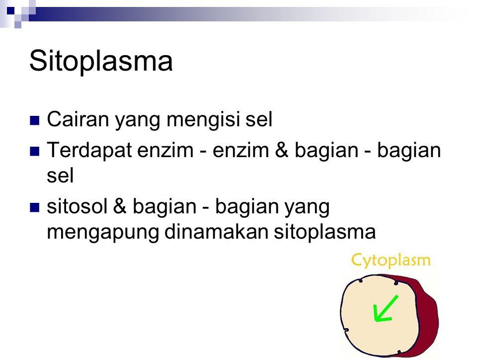 Sitoplasma Cairan yang mengisi sel