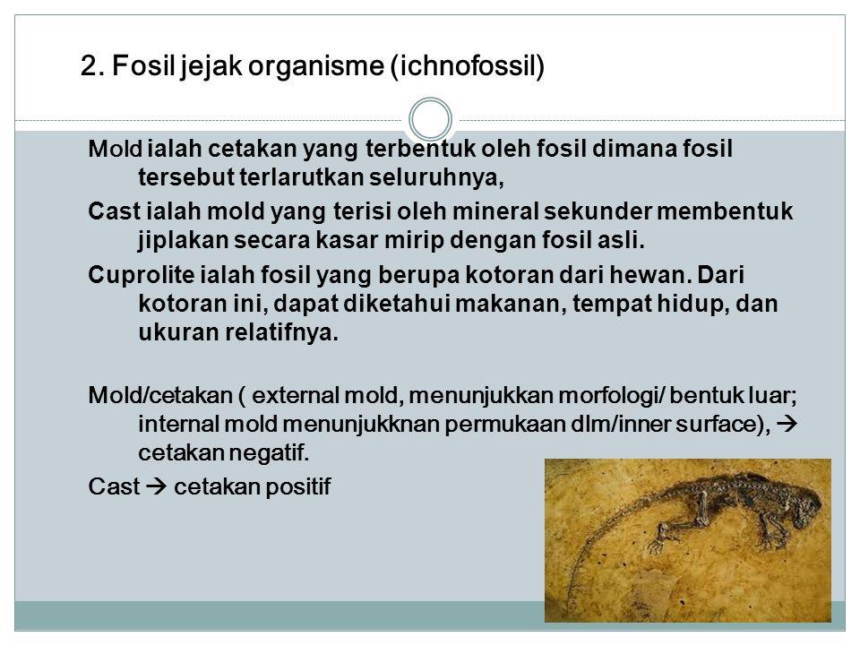 2. Fosil jejak organisme (ichnofossil)