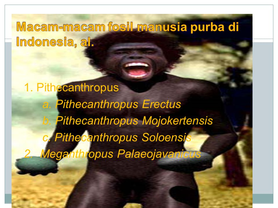Macam-macam fosil manusia purba di Indonesia, al.