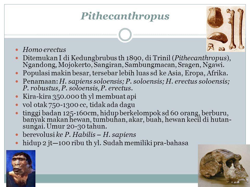 Pithecanthropus Homo erectus