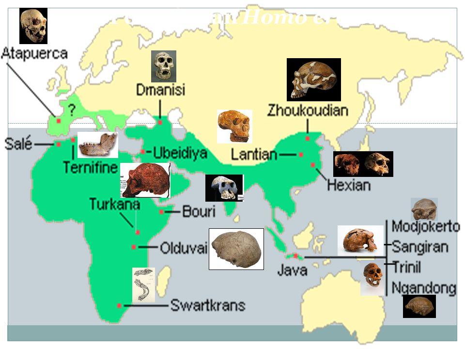 Penyebaran Homo erectus