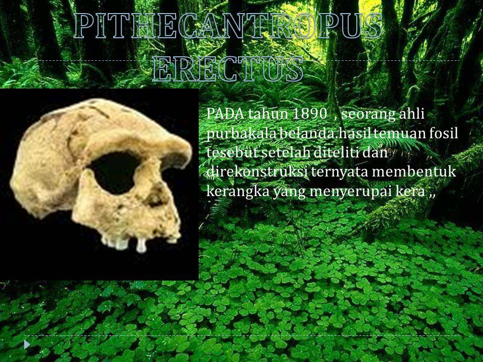 PITHECANTROPUS ERECTUS