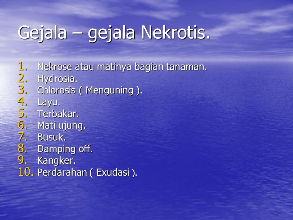 Gejala – gejala Nekrotis.