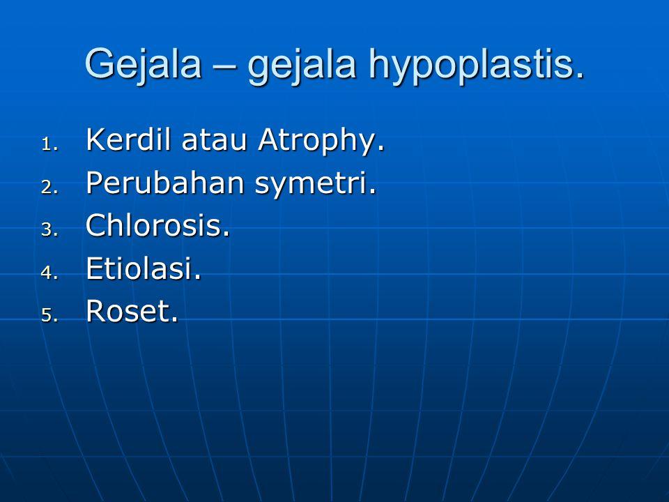 Gejala – gejala hypoplastis.