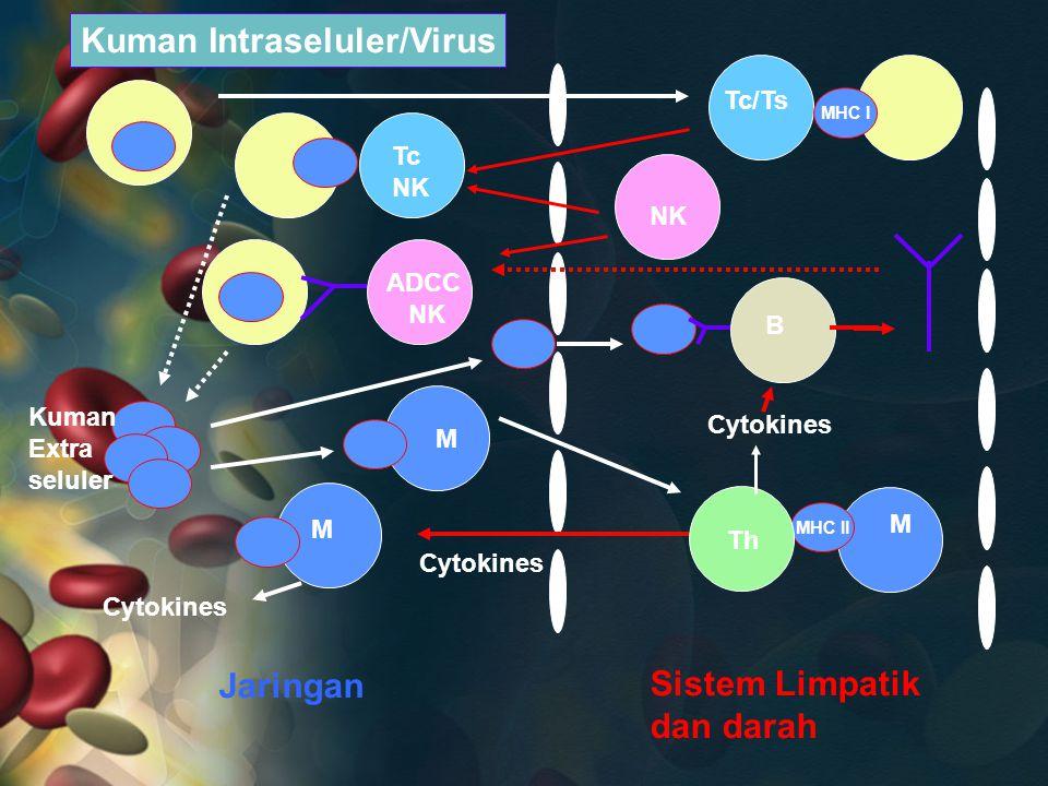 Kuman Intraseluler/Virus