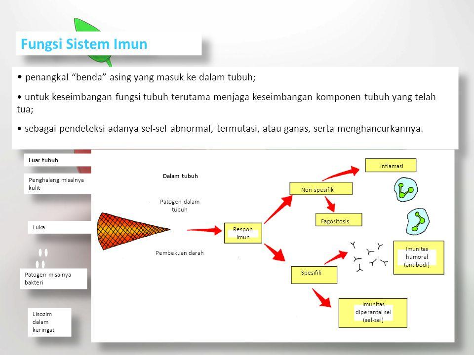 Fungsi Sistem Imun penangkal benda asing yang masuk ke dalam tubuh;