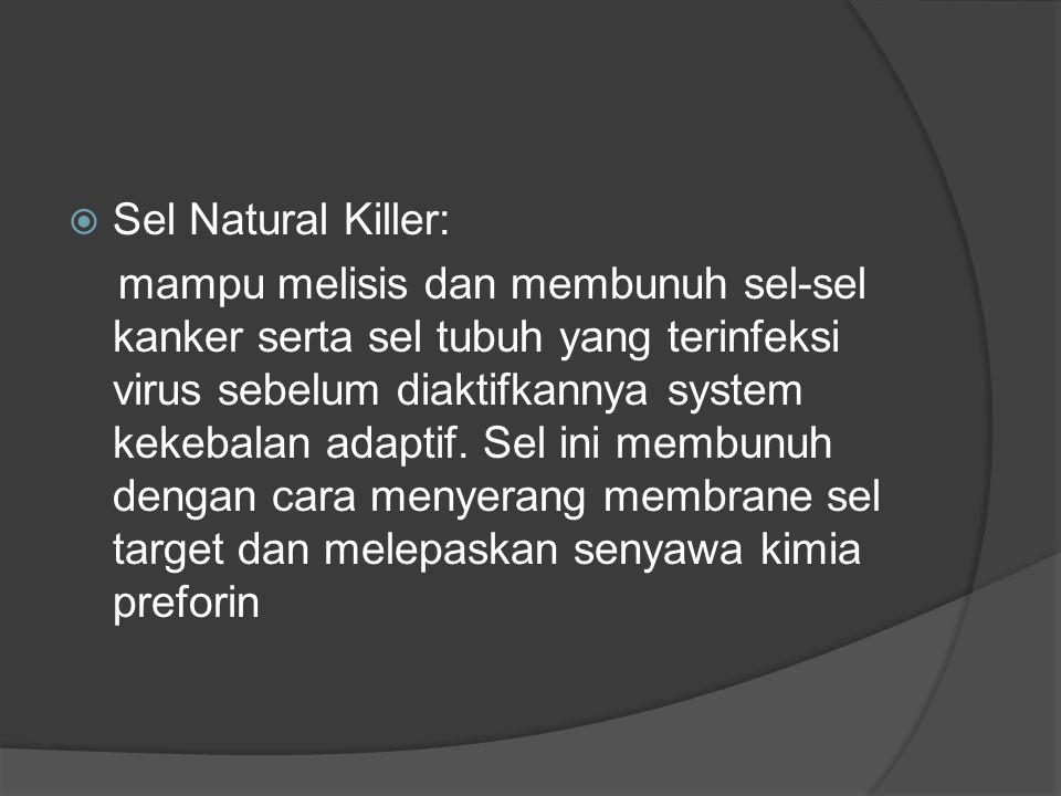 Sel Natural Killer: