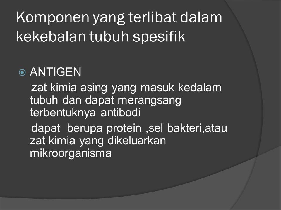 Komponen yang terlibat dalam kekebalan tubuh spesifik
