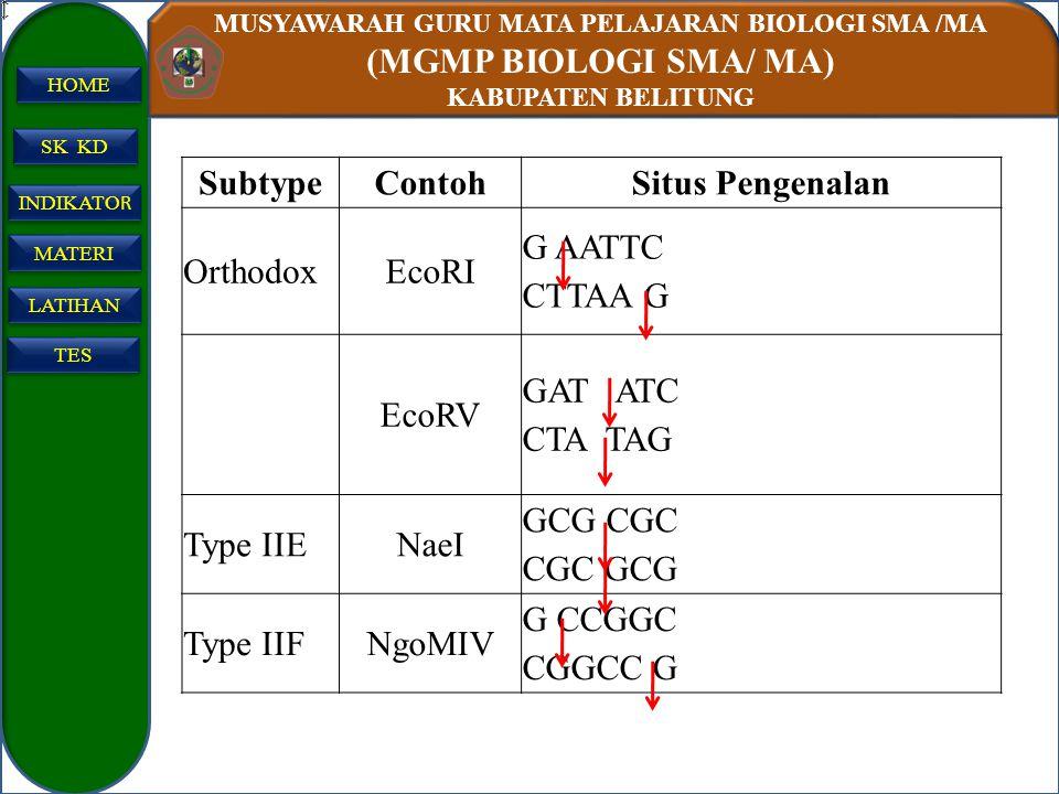 Subtype Contoh. Situs Pengenalan. Orthodox. EcoRI. G AATTC CTTAA G. EcoRV. GAT ATC. CTA TAG.