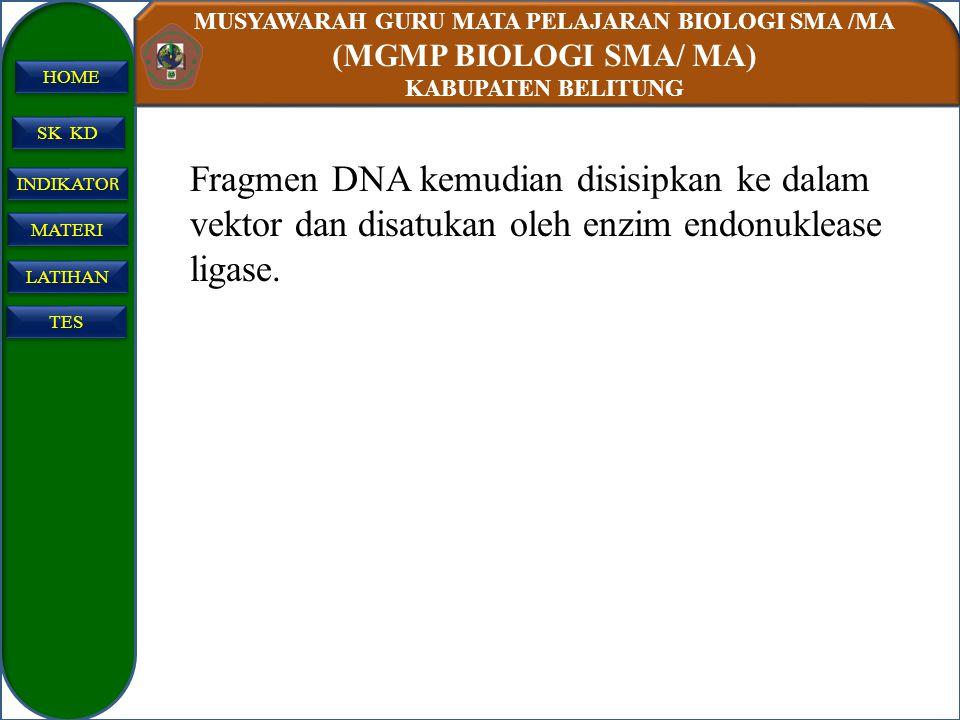 Fragmen DNA kemudian disisipkan ke dalam vektor dan disatukan oleh enzim endonuklease ligase.