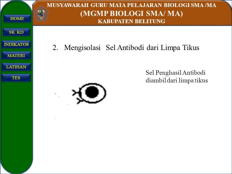 Mengisolasi Sel Antibodi dari Limpa Tikus