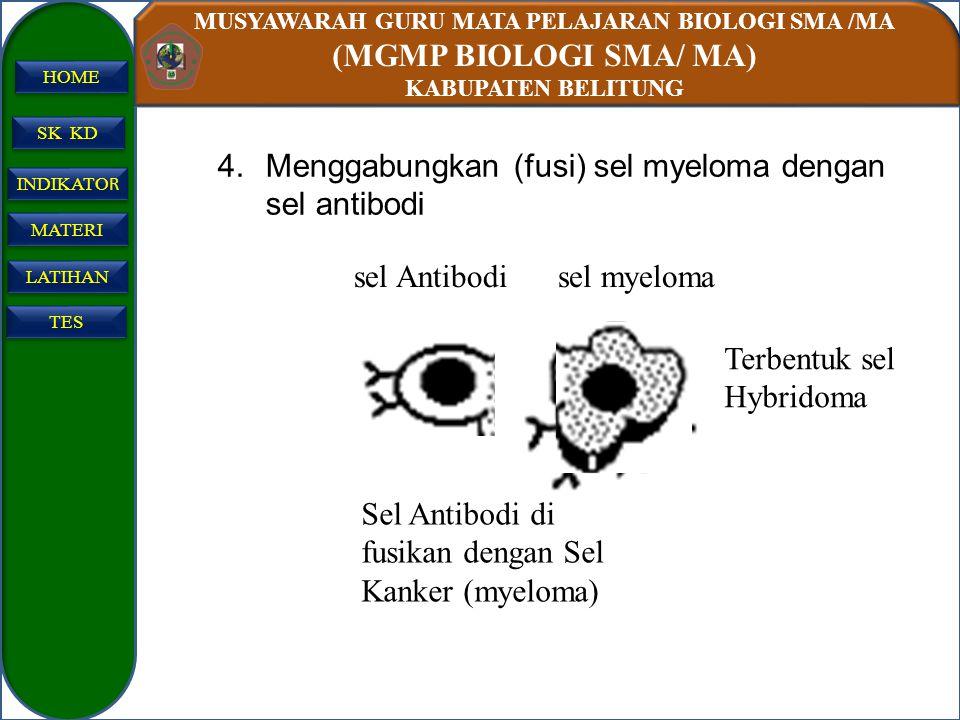 Menggabungkan (fusi) sel myeloma dengan sel antibodi
