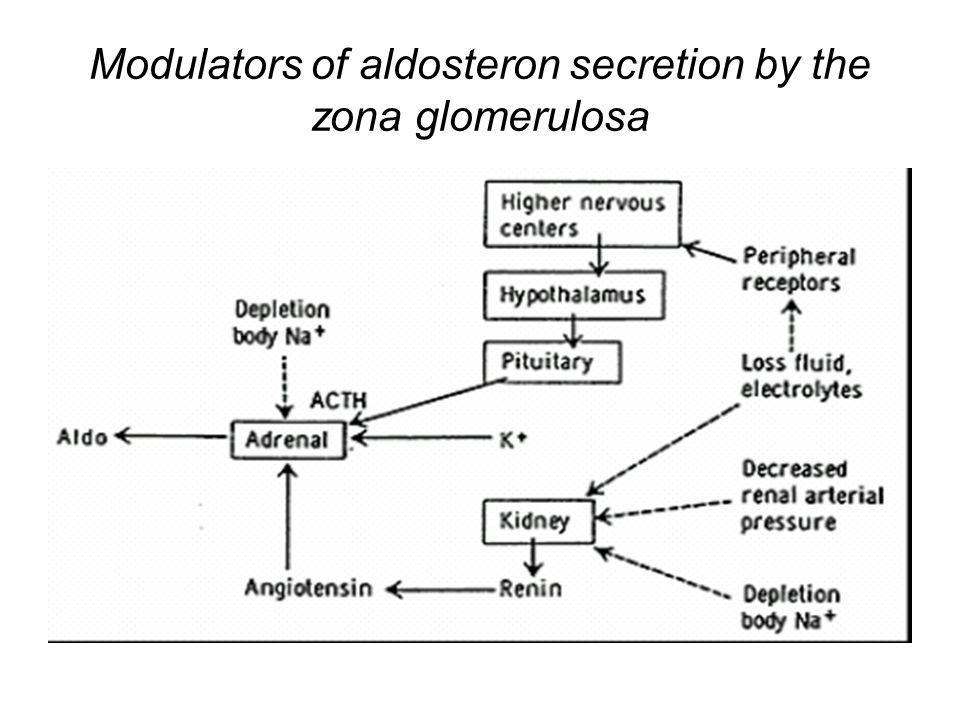 Modulators of aldosteron secretion by the zona glomerulosa