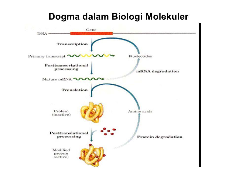 Dogma dalam Biologi Molekuler