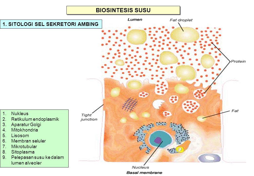 BIOSINTESIS SUSU 1. SITOLOGI SEL SEKRETORI AMBING Nukleus