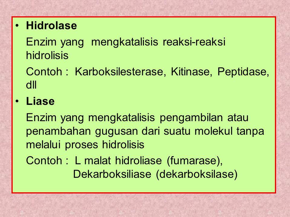 Hidrolase Enzim yang mengkatalisis reaksi-reaksi hidrolisis. Contoh : Karboksilesterase, Kitinase, Peptidase, dll.