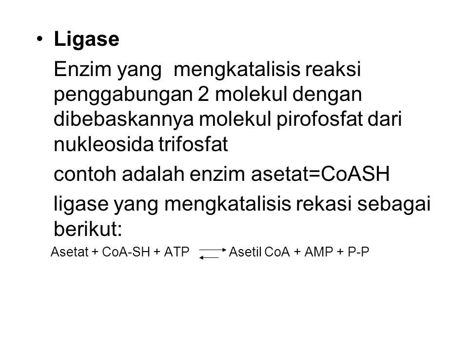 contoh adalah enzim asetat=CoASH