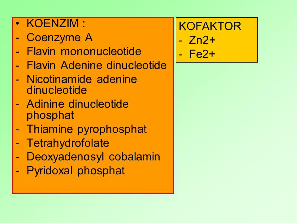 KOENZIM : Coenzyme A. Flavin mononucleotide. Flavin Adenine dinucleotide. Nicotinamide adenine dinucleotide.