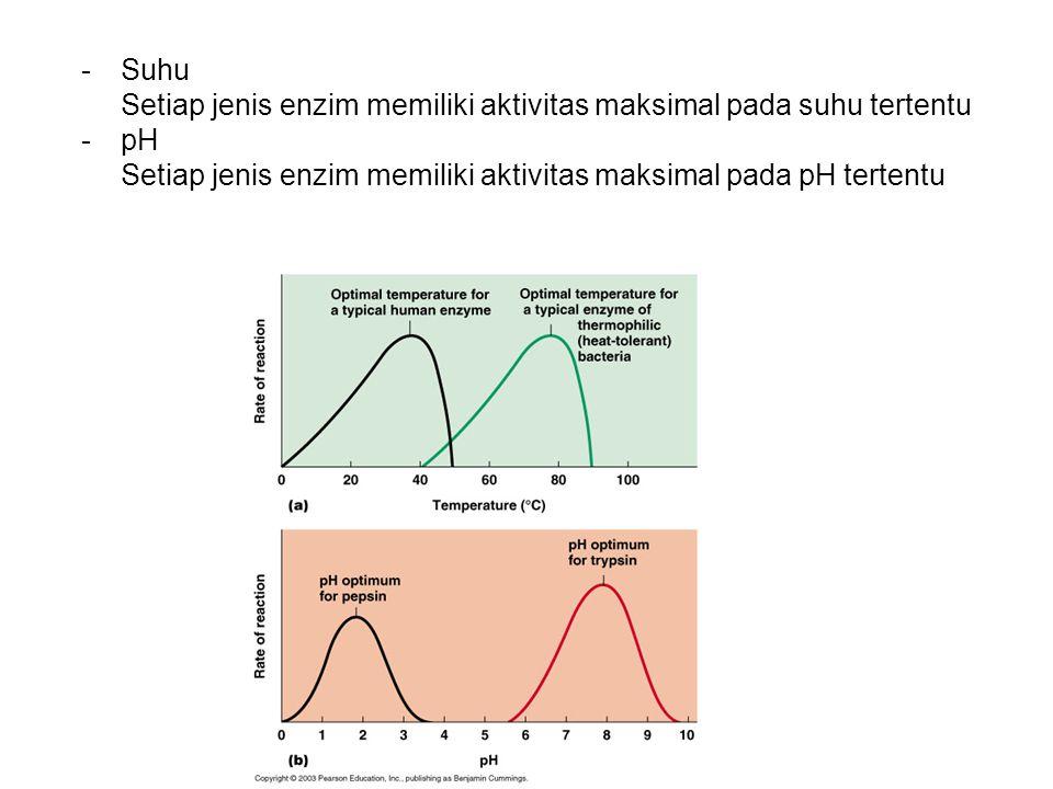 Suhu Setiap jenis enzim memiliki aktivitas maksimal pada suhu tertentu.