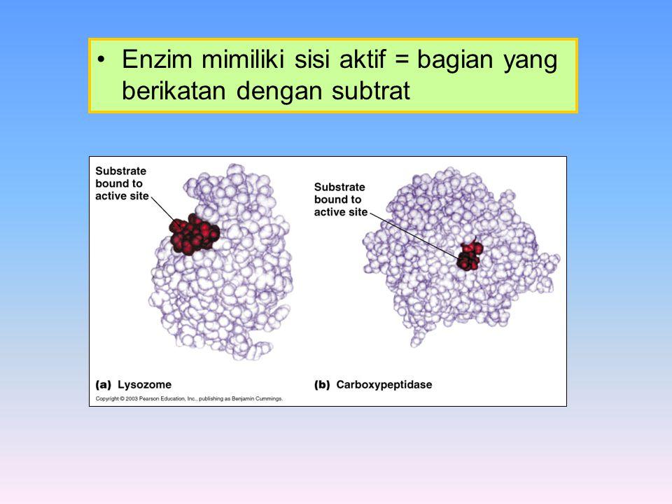 Enzim mimiliki sisi aktif = bagian yang berikatan dengan subtrat
