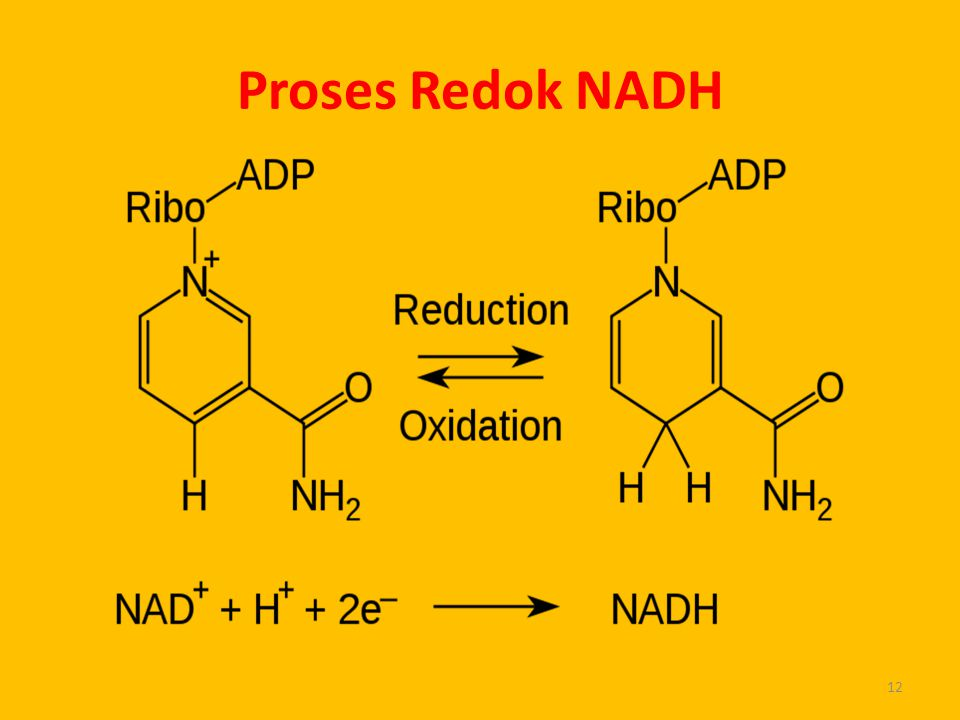 Proses Redok NADH