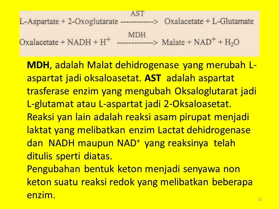 MDH, adalah Malat dehidrogenase yang merubah L-aspartat jadi oksaloasetat. AST adalah aspartat trasferase enzim yang mengubah Oksaloglutarat jadi L-glutamat atau L-aspartat jadi 2-Oksaloasetat.