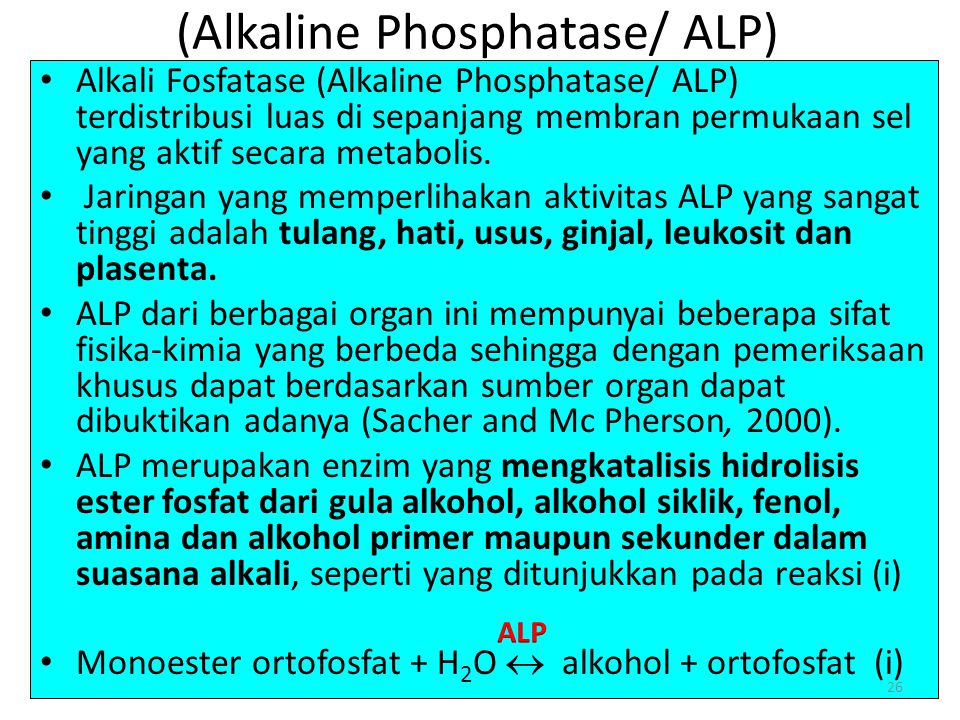 (Alkaline Phosphatase/ ALP)