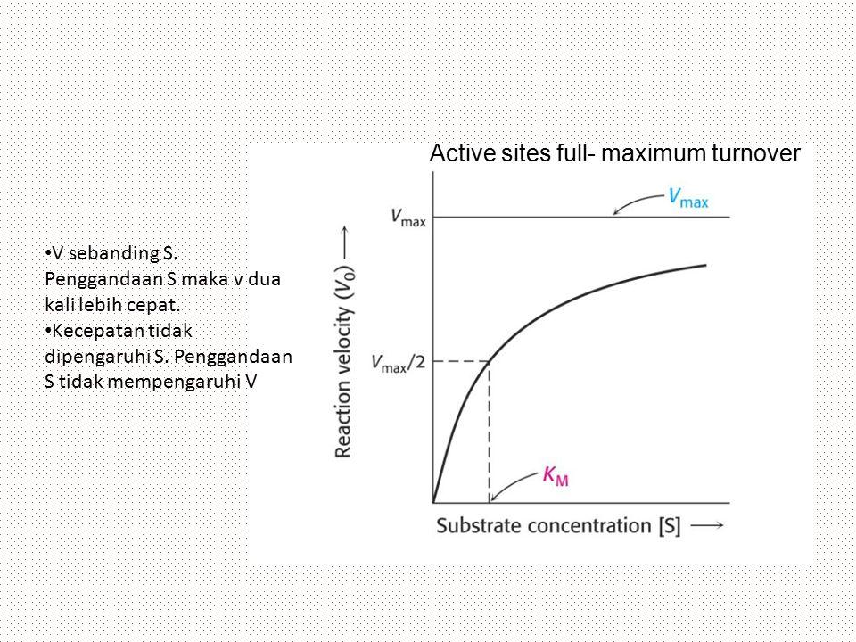 Active sites full- maximum turnover