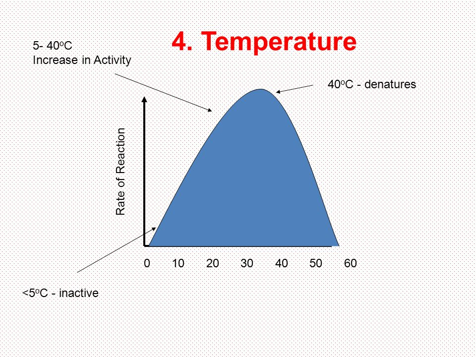4. Temperature 5- 40oC Increase in Activity 40oC - denatures