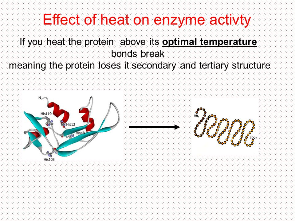Effect of heat on enzyme activty