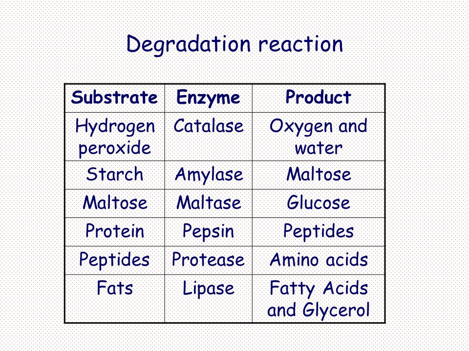 Fatty Acids and Glycerol