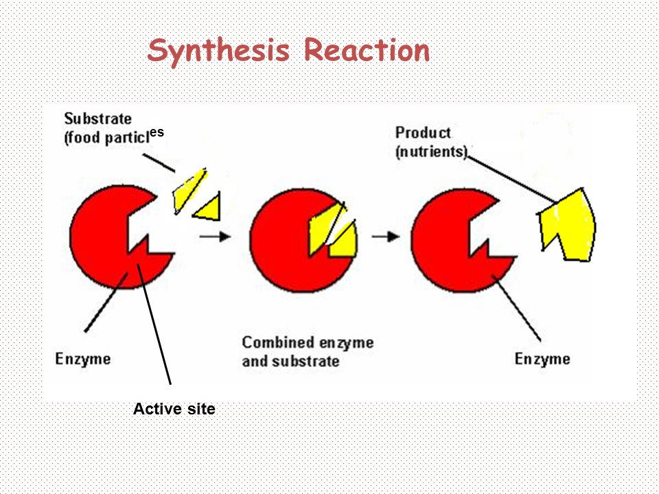 Synthesis Reaction es Active site