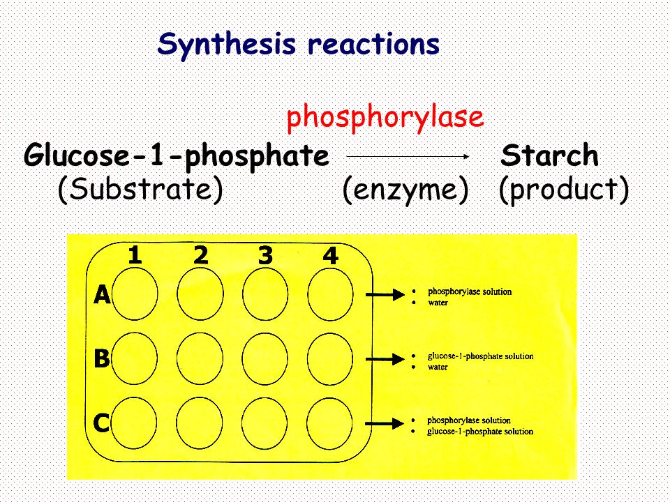 Synthesis reactions phosphorylase. Glucose-1-phosphate Starch.