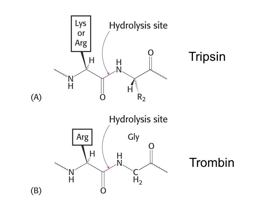 Tripsin Trombin