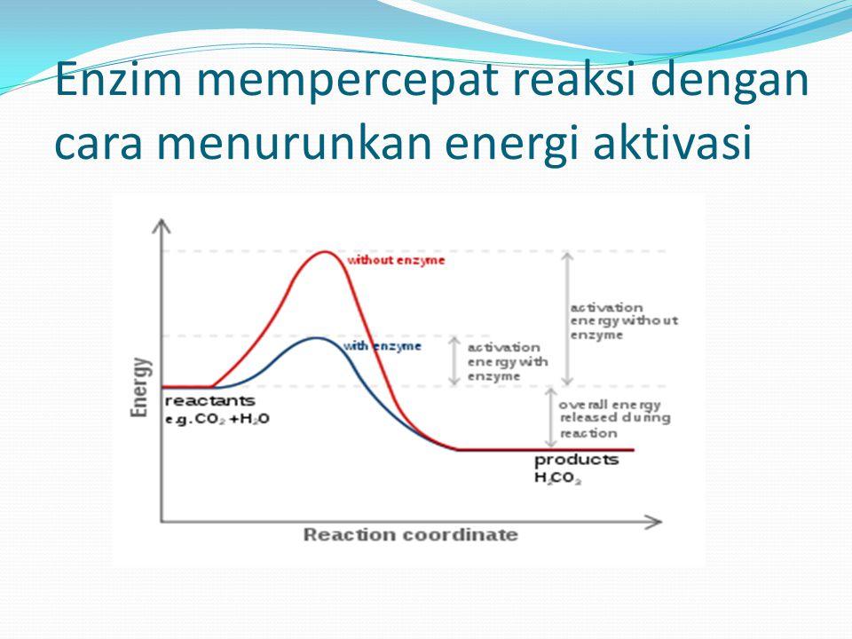 Enzim mempercepat reaksi dengan cara menurunkan energi aktivasi