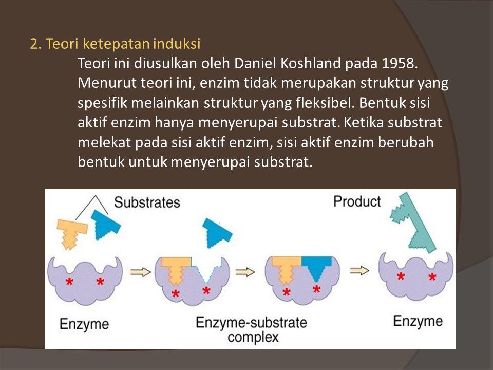 2. Teori ketepatan induksi Teori ini diusulkan oleh Daniel Koshland pada 1958.