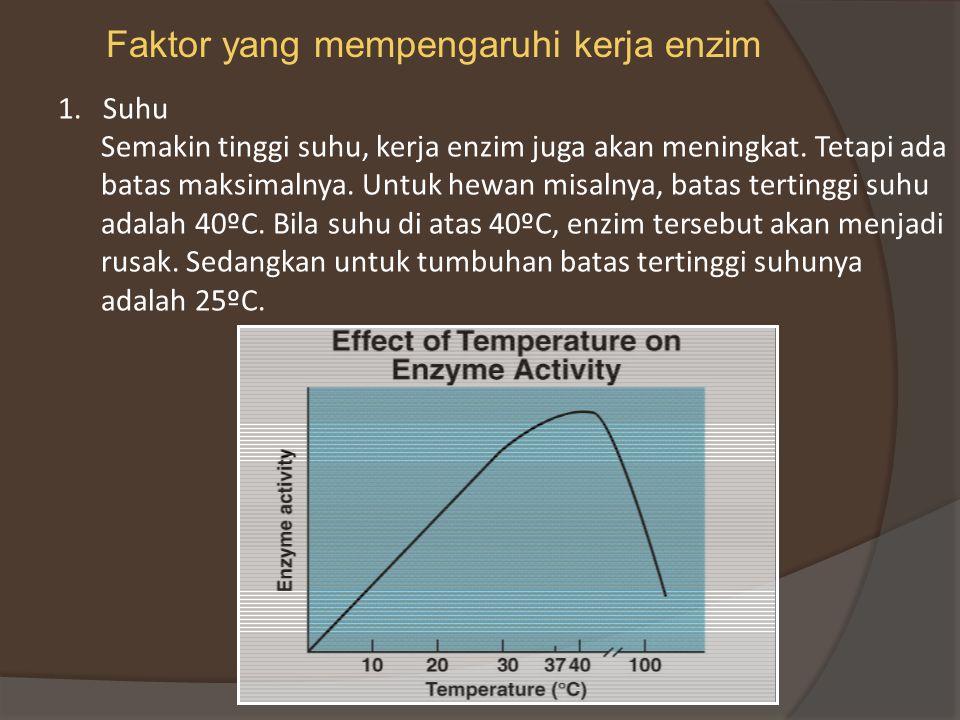 Faktor yang mempengaruhi kerja enzim
