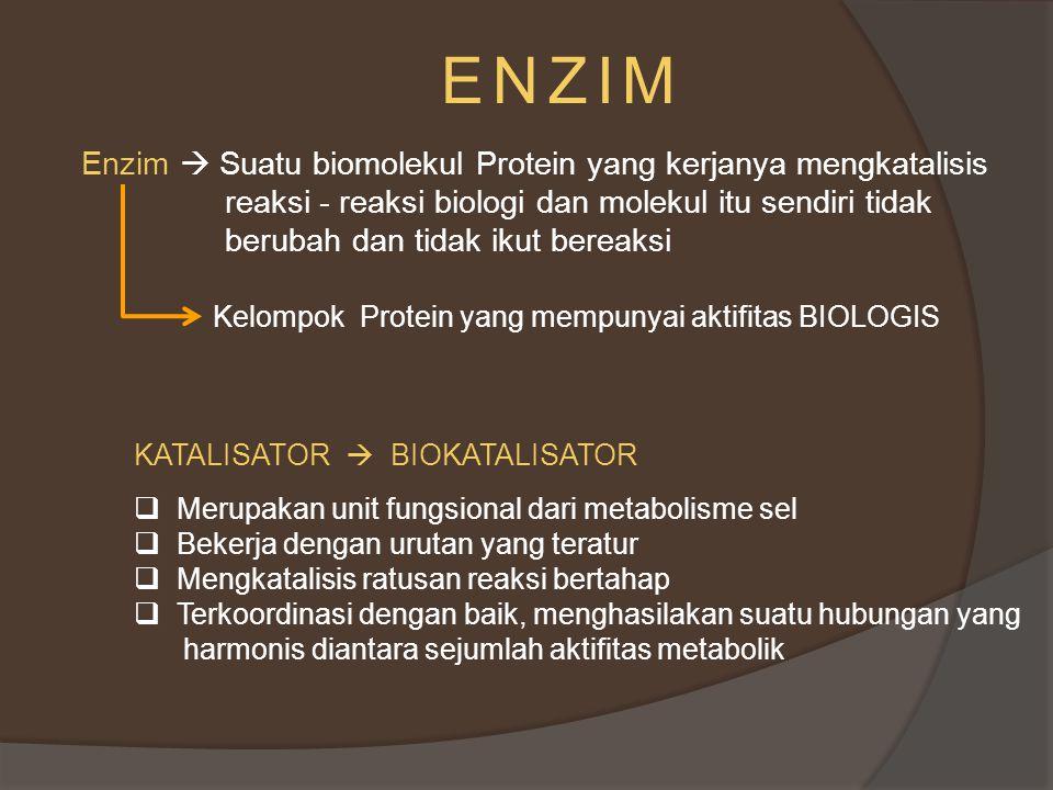 ENZIM Enzim  Suatu biomolekul Protein yang kerjanya mengkatalisis