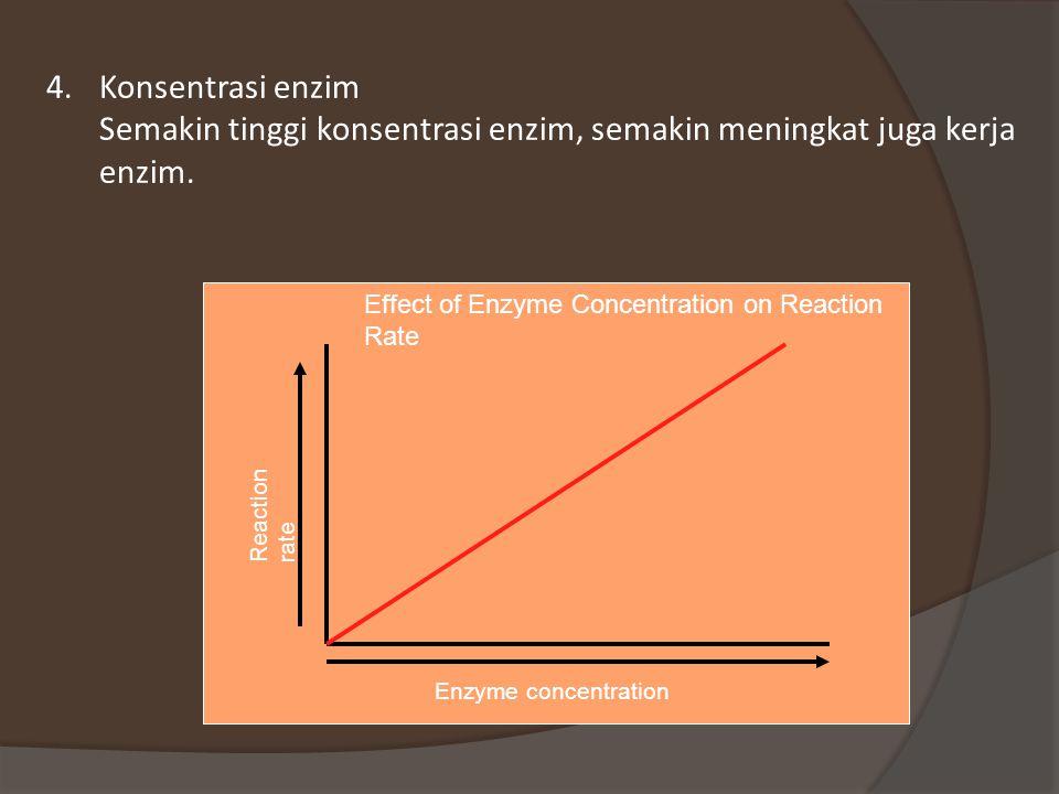 Konsentrasi enzim Semakin tinggi konsentrasi enzim, semakin meningkat juga kerja enzim.