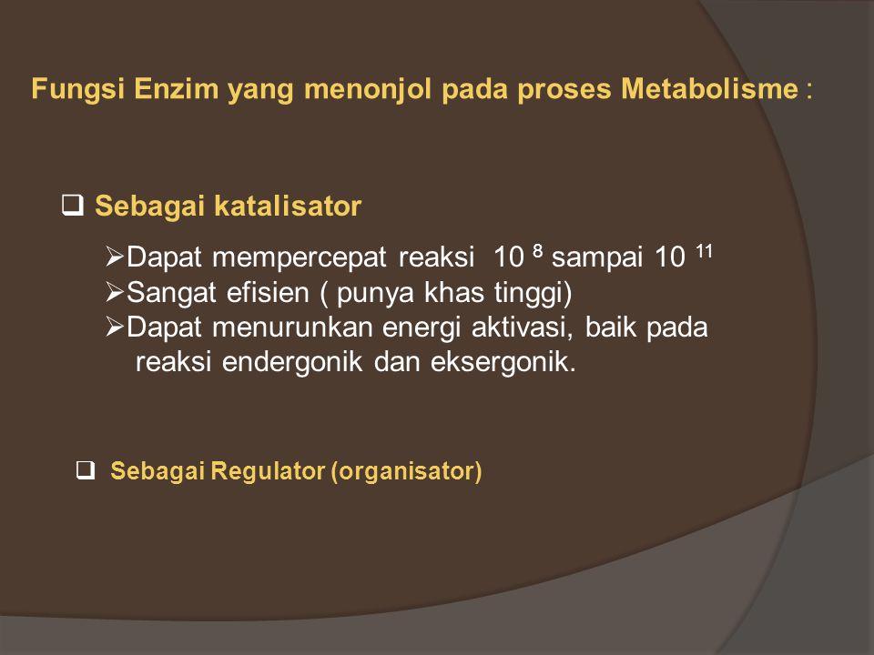Fungsi Enzim yang menonjol pada proses Metabolisme :