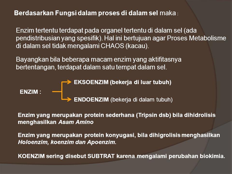 Berdasarkan Fungsi dalam proses di dalam sel maka :